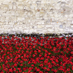Poppies for Peace, Hope and Remembrance